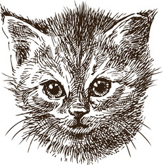 Photo sur Toile Croquis dessinés à la main des animaux sketch portrait of a small kitten