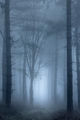 Path through foggy woodland