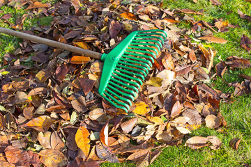 The rake on the leaves and grass