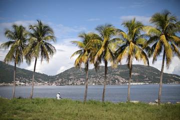 A man walks next to palm trees in Cap-Haitien