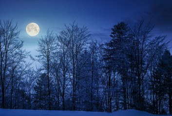forest on snowy hillside at night