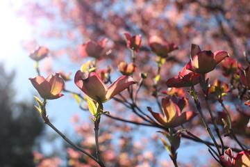 Hopeful Sun in Trees