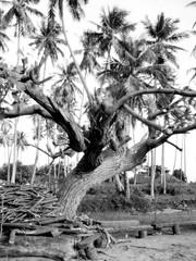 Naturaleza y flora en Tahiti, Polinesia Francesa (Oceania)
