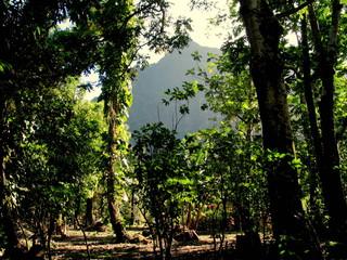 Naturaleza en isla de Tahiti (Polinesia Francesa)
