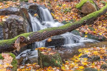 Wasserfall Holzstamm Harzlandschaft
