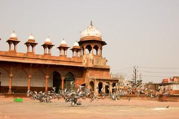 Tauben in Moschee