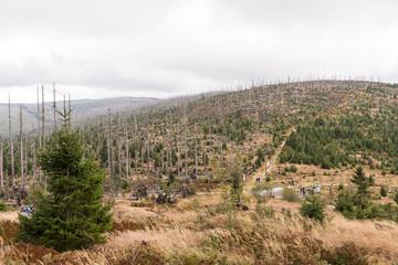 Waldsterben am Dreisesselberg