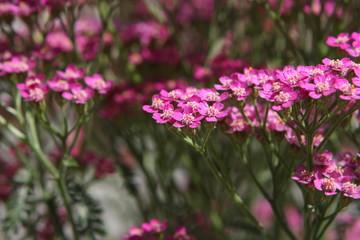 pink little flowers 2