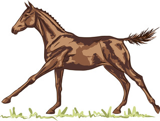 A sketch of a freely galloping foal.