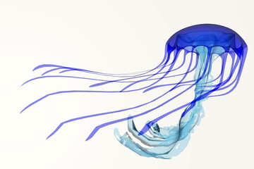 Blue Jellyfish - A jellyfish is a soft body, free-swimming aquatic animal with poisonous, stinging tentacles to catch its food.