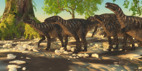 Iguanodon Dinosaurs - Iguanodon herbivorous dinosaurs lived during the Cretaceous Period of Europe and walked with a herd of animals.