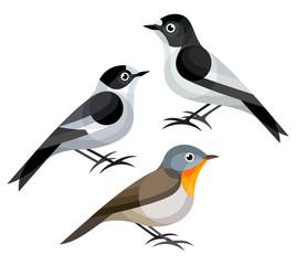 Stylized Birds - European Pied Flycatcher, Collared Flycatcher, Red-breasted Flycatcher