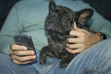 hands man holding phone and his dog looking