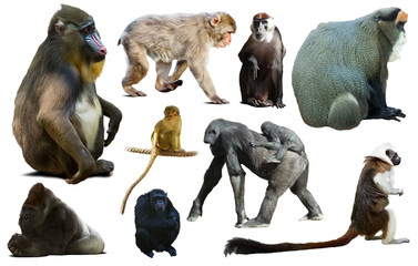 collection of different monkeys