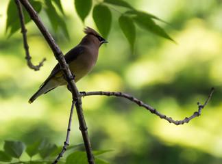 Bird on branch