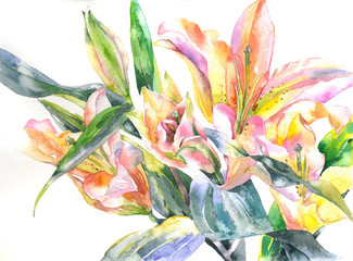 Beautiful, bright, fragrant, garden, decorative flower. Tender, summer, noble lily. Feminine, festive bouquet. Watercolor. Illustration