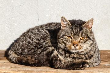 Gato callejero tumbado al sol.