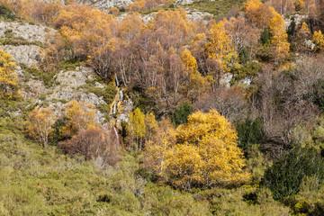 Paisaje con cascadas, abedules y acebos en otoño. Espacio Natural Sierra de Los Ancares.