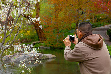 New York City Central Park spring flowers. Man takes a photograph of a flowering tree.