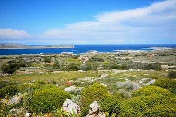 Views towards Gozo and Comino seen from the Red Fort with yellow wildflowers in the foreground, Malta.