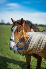Horses Sunbathing In Pasture Germany, 2017