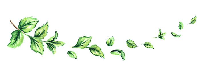 Fresh peppermint, horizontal composition. Watercolor hand drawn illustration