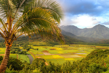 View over cultivated fields in Kauai