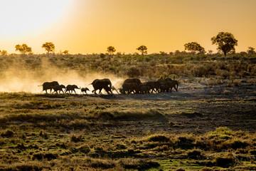 Elefants at sunset