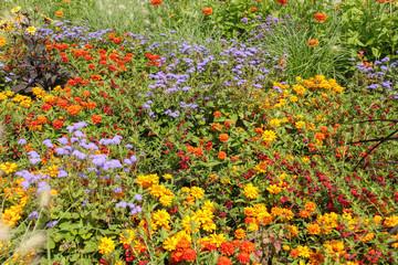 Blumenwiese, Dahlie, Margaritte