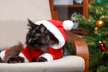 Christmas portrait of black cat in Santa costume