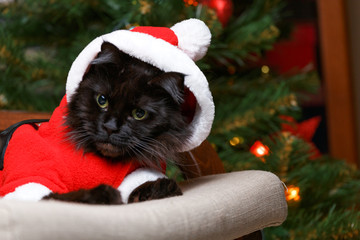 Photo of black cat in santa costume in armchair