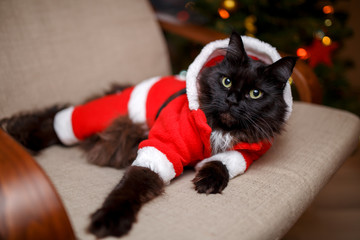Image of festive cat in Santa costume sitting at chair