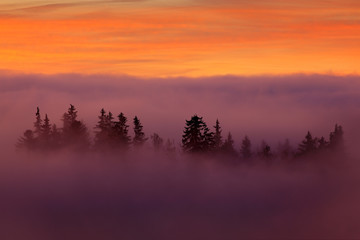 Sumava mountain, Czech Republic. Valley few minutes before sunset  in national park Sumava. Pink and orange morning with stick out top of trees from cloud fog. Misty magic sunrise in wild nature.