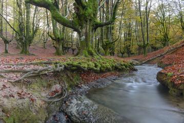 Hayedo de Otzarreta, Parque Natural del Gorbea, Vizcaya (España)