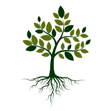 Green tree with roots on a white background. Vector Illustration