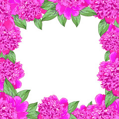 Frame. Pink peony realistic flowers