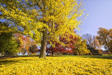Otoño, hojas y arboles