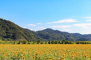 ひまわり -夏の風景-