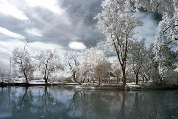 Tree in the park with near infrared.