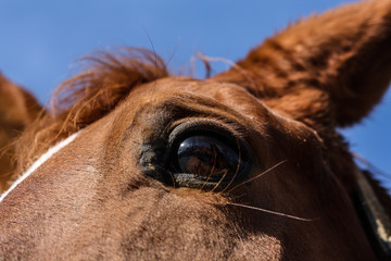 The horse's eyes - Horse portrait