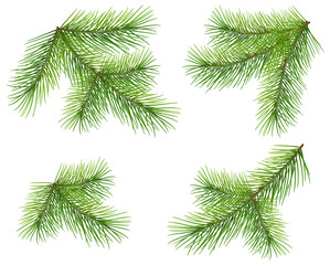 Set green pine branch isolated on white. Lush fluffy fir Christmas tree twig