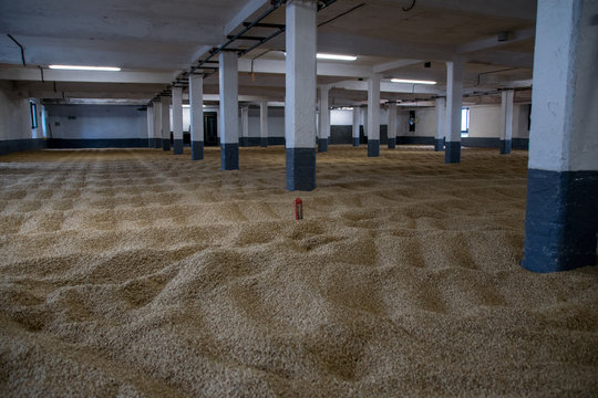Barley malting floors