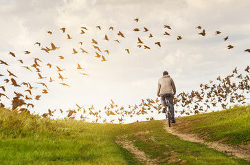 Man in countryside rides bicycle on dirt road. Flock of birds (crows and doves) on the background.