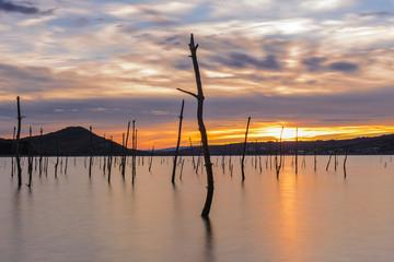 Dead forest in Ullibarri-Gamboa reservoir, Basque Country, Spain