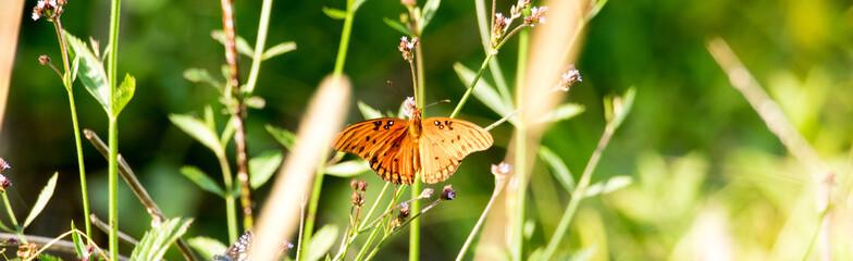 Foto auf Acrylglas Schmetterlinge im Grunge Wings and Things
