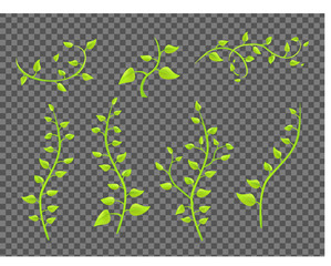 ivy twigs with leaves on a transparent background vector