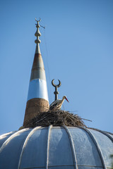 stork nest on the mosque