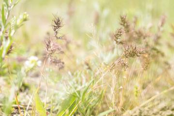 Green juicy grass in the field