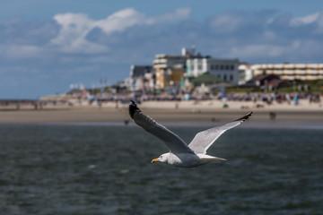 gull aside the coast