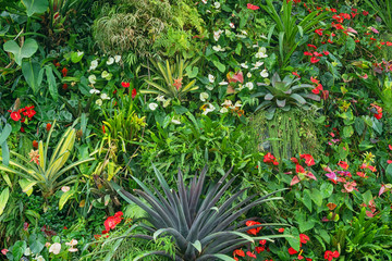 Tropical plants with flowers - natural background